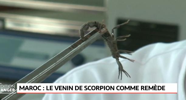 Maroc: le venin de scorpion utilisé dans la recherche sur le cancer