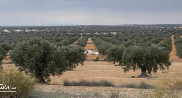 ارتفاع نسبة إنتاج الزيتون مقارنة مع الموسم الماضي في تونس