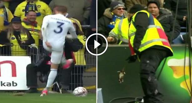 Vidéo: des supporters danois lancent des rats morts sur les joueurs adverses