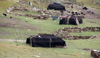 مجلس الحكومة يصادق على مشروع مرسوم يتعلق بالترحال الرعوي