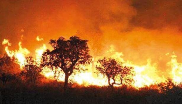 Tunisie: 300 incendies ayant ravagé plus de 3.000 ha de forêts depuis fin juillet