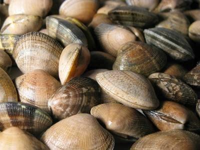 El Jadida: Interdiction de la récolte et de la commercialisation des mollusques bivalves issus de Jmaâ Ouled Ghanem-Dar Lhamra