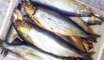 بحث قضائي ببولونيا في مبيعات منتوجات سمكية فاسدة يجر أزيد من ألف شخص للمساءلة القانونية