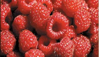 التوت الأحمر يساعد على تجديد خلايا البشرة ويؤخر شيخوختها