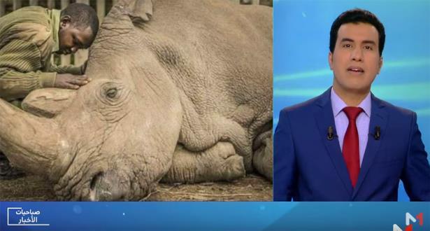 """""""دردشة صباحيات الأخبار"""" حول نفوق آخر وحيد قرن أبيض في العالم"""