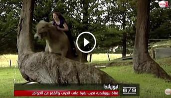 فيديو طريف .. فتاة نيوزلندية تدرب بقرة على الجري والقفز على الحواجز