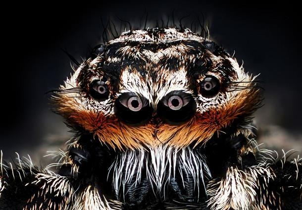 عالم المجهر...وحوش مخيفة تعيش بيننا