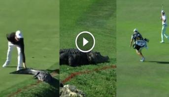 فيديو طريف .. تمساح يثير خوف لاعبي غولف في فلوريدا