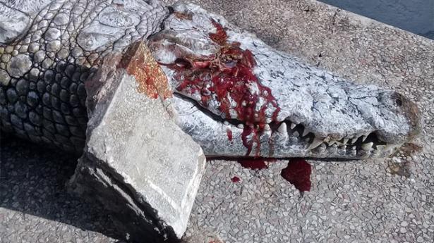 Un crocodile du zoo de Tunis tué à coups de pierres par des visiteurs