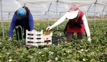 وزارة الشغل تنفي تعرض العاملات المغربيات بإسبانيا لأي مضايقات