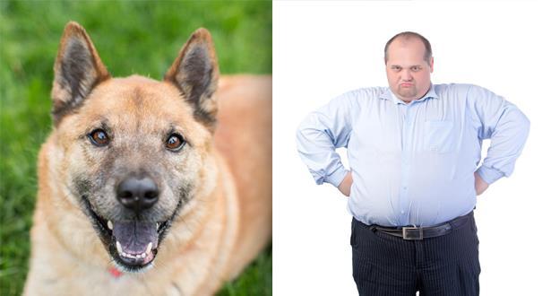 نتيجة بحث الصور عن الكلاب السمينة