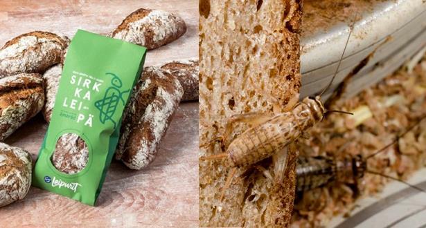 مخبز فنلندي يطرح أول رغيف في العالم تدخل الحشرات في إنتاجه