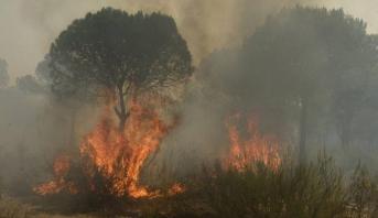إسبانيا.. رجال الإطفاء يكافحون حريقا قرب محمية لحيوانات مهددة بالانقراض