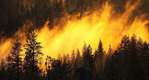 Préfecture de Larache: Extinction d'un incendie de forêt ayant ravagé environ 40 ha