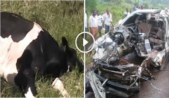 فيديو .. حادث سير في أوغندا يخلف مقتل 14 شخصا على الأقل بسبب بقرة