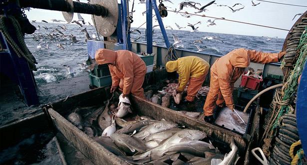 الصيد الساحلي والتقليدي .. انخفاض حجم التفريغ خلال النصف الأول من 2018
