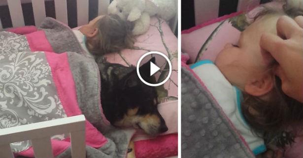 Vidéo: adorable moment de complicité entre un chien et une fillette