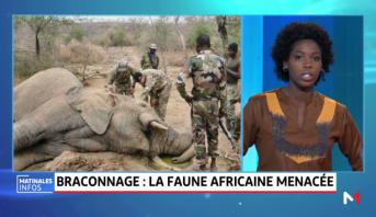 Braconnage: la faune africaine menacée