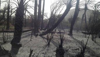 طاطا .. وزارة الفلاحة تطلق برنامجا لإعادة غرس أشجار النخيل المتضررة بالحرائق