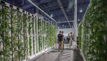 مزرعة رأسية في الإمارات .. بداية حل مبتكر ومستدام لمشكلة الأمن الغذائي