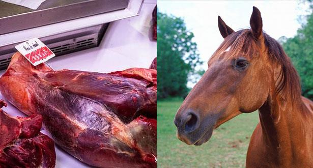 """""""يوروبول"""" يعتقل عشرات الأشخاص في إسبانيا بسبب فضيحة لحوم الخيول"""