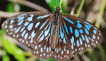 باحثون صينيون وبريطانيون يكشفون عن ألوان الحشرات قبل 100 مليون سنة