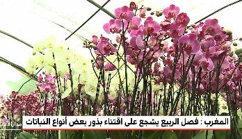 المغرب .. تزايد الإقبال على اقتناء بذور النباتات خلال فصل الربيع