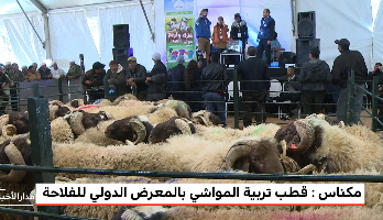 روبورتاج .. إقبال كبير على قطب تربية المواشي بالمعرض الدولي للفلاحة بمكناس