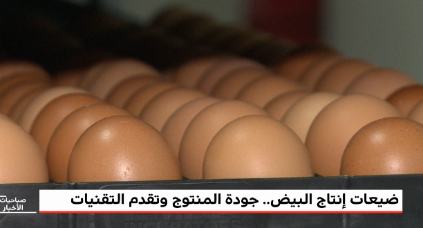 روبورتاج .. ضيعات إنتاج البيض .. جودة المنتوج وتقدم التقنيات