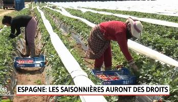 Le Maroc annonce des mesures d'aide à ses cueilleuses de fraises en Espagne