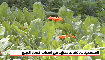 المغرب الأخضر .. مشاريع البستنة بمنطقة الغرب