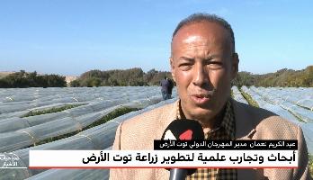 """""""المغرب الأخضر"""" .. أبحاث وتجارب علمية لتطوير زراعة توت الأرض"""