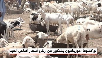 نواكشوط .. موريتانيون يشتكون من ارتفاع أسعار أضاحي العيد