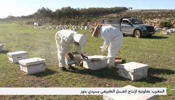 """""""المغرب الأخضر"""" .. تجربة تعاونية لإنتاج العسل الطبيعي بسيدي بنور"""
