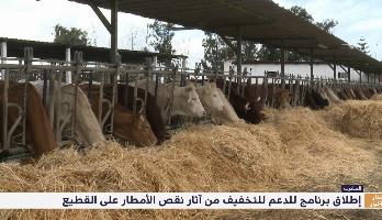 وزارة الفلاحة تطلق برنامجا للدعم للتخفيف من آثار نقص الأمطار على القطيع