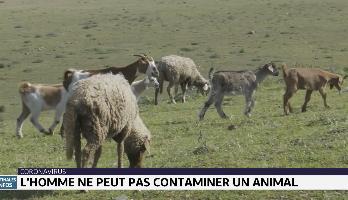 Coronavirus: l'homme ne peut pas contaminer un animal