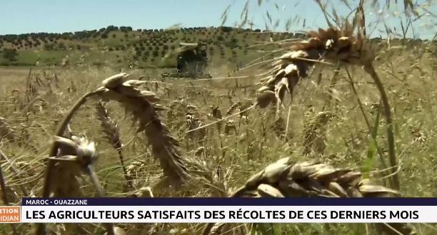Ouazzane: les agriculteurs satisfaits des récoltes de ces derniers mois