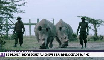 """Préservation des espèces: le projet """"Biorescue"""" au chevet du rhinocéros blanc"""