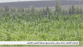 الزراعات الكلئية .. نشاط يحظى برعاية وتتبع مخطط المغرب الأخضر