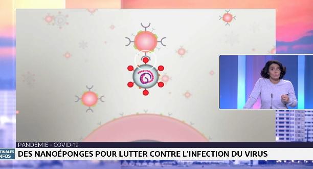 Chronique matinale: des nanoéponges pour lutter contre l'infection du virus