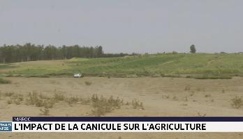Maroc: l'agriculture impactée par la vague de chaleur