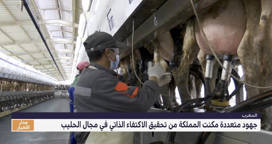 روبورتاج .. جهود متعددة مكنت المملكة من تحقيق الاكتفاء الذاتي في مجال الحليب