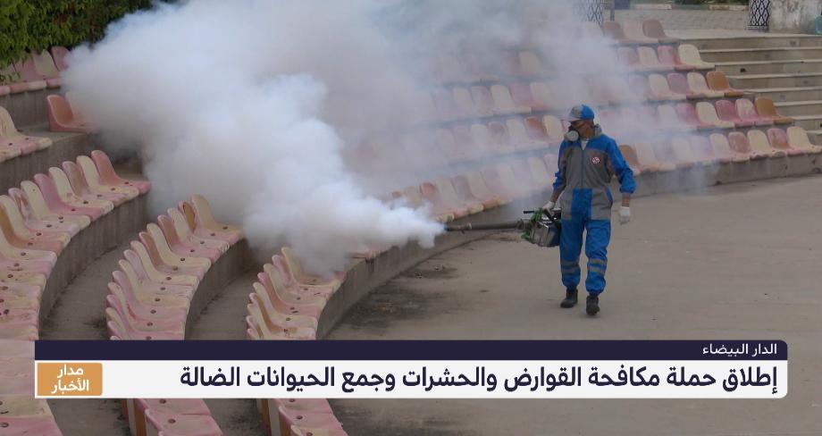 روبورتاج من الدار البيضاء .. حملة لمكافحة القوارض والحشرات وجمع الحيوانات الضالة