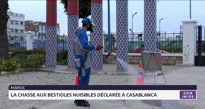 Maroc: la chasse aux bestioles nuisibles déclarée à Casablanca