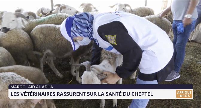 Aid Al Adha au Maroc: les vétérinaires rassurent sur la santé du cheptel