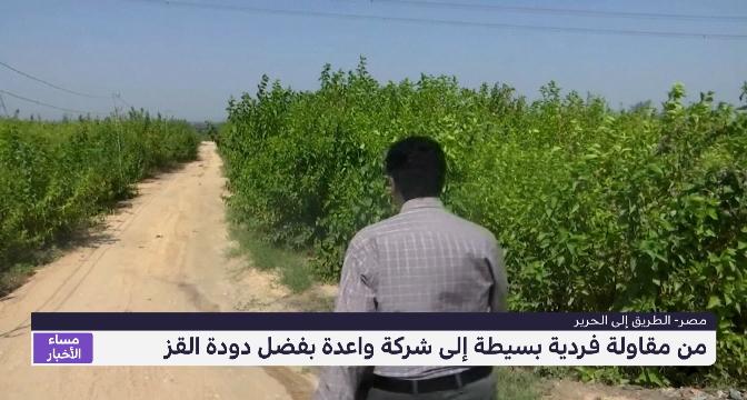 الطريق إلى الحرير في مصر..من مقاولة فردية بسيطة إلى شركة واعدة بفضل دودة القز