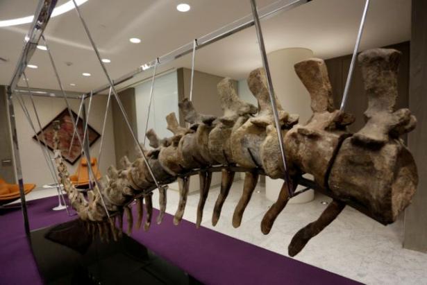 """فتح تحقيق أولي حول طرح """" ذيل ديناصور"""" مغربي للبيع في مزاد بالمكسيك"""
