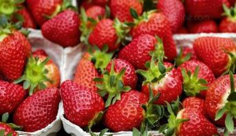سلسلة متاجر نيوزيلندية توقف بيع فراولة أسترالية بعد اكتشاف إبر فيها
