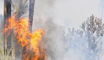تونس.. عدد حرائق الغابات في 2020 فاق إجمالي الحرائق التي نشبت خلال الفترة ما بين 2011 و 2019