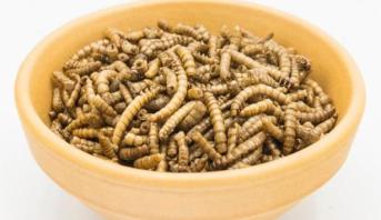 أول موافقة من هيئة أوروبية على اعتماد حشرات كغذاء للبشر